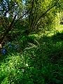 Alto Adige Suedtirol, Biotopo Rio dei Gamberi Krebsbach. Photo by Giovanni Ussi - 01.jpg