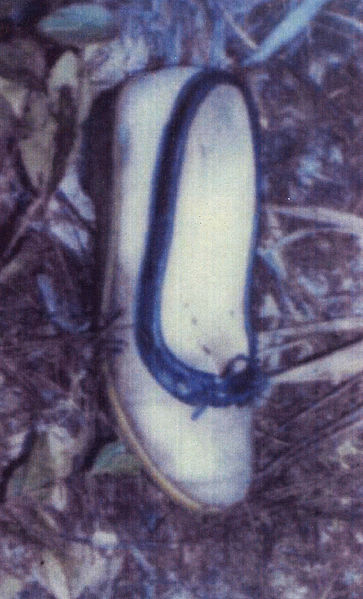 File:Altoona Jane Doe Shoe.jpg