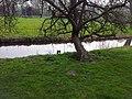 Amsterdam Noord 04 2014 - panoramio (4).jpg