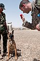Anbar Police stand up K-9 unit DVIDS272344.jpg