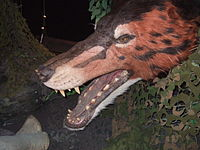 Andrewsarchus head model.jpg