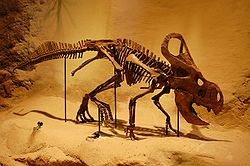 definition of ceratopsidae