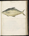 Animal drawings collected by Felix Platter, p1 - (119).jpg