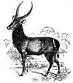 Antelope 4.png