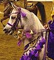Arabian Costume Horse (2486993460).jpg