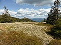 Arber-Gipfelwiese.jpg