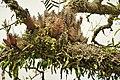 Arboreal plants (48885136838).jpg