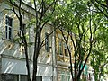 Architectural Detail - Varna - Bulgaria - 02 (29305831548).jpg
