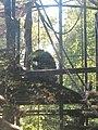 Artis, Zoo, Dierentuin - panoramio (116).jpg