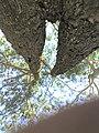 Arvore - panoramio - Reinaldo08.jpg