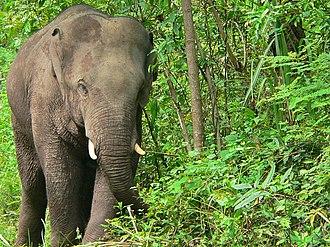 National symbols of Thailand - Thai Elephant