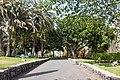 At Santa Cruz de Tenerife 2021 055.jpg
