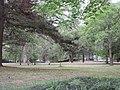 Audubon Park New Orleans 7 April 2020 - 12.jpg
