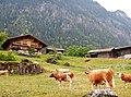 Auf dem Weg nach Grindelwald - panoramio.jpg
