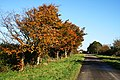 Autumn Colour by the Roadside - geograph.org.uk - 603761.jpg