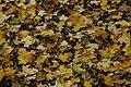 Autumn leaves - geograph.org.uk - 1036371.jpg
