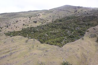 Hawaiian tropical dry forests - Auwahi Dryland Forest