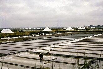 Aveiro Lagoon - Salt marshes in the Aveiro