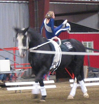Surcingle - A surcingle (or roller) used for equestrian vaulting.