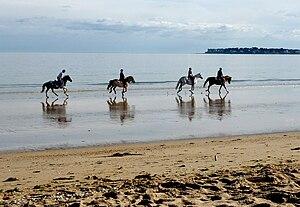 La Baule – Presqu'île de Guérande - Horses on La Baule beach