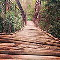 Bamboo Bridge Silent Valley.jpg