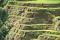 Banaue Rice Terrace Close Up (3).JPG