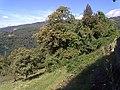 Barga, Province of Lucca, Italy - panoramio - jim walton (6).jpg