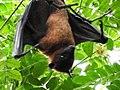 Bat@BugleRockPark.jpg