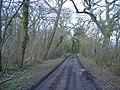 Battlelake wood - geograph.org.uk - 358068.jpg