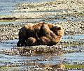Bear Alaska (5).jpg