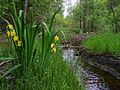 Beaver trail ShatskyiNNP Ukraine.jpg