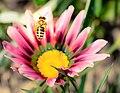 Bee (173805421).jpeg