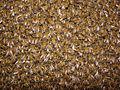 Bee texture (2004).jpg
