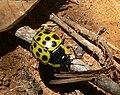 BeetleBrazil 068.jpg