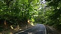 Belgrad Forest (2).jpg