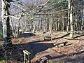 Benches in the wood - geograph.org.uk - 1747676.jpg