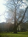 Berkeley Square Park, London - panoramio.jpg