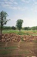 Between Bandiagara and Djiguibombo (6463289).jpg