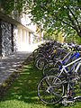 Bicycles at UAF.jpg