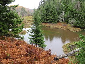 Big Run (North Fork South Branch Potomac River) - The first beaver pond at the head of the marshland where Big Run originates. The beaver dam is in the lower-right corner. Also in the lower-right is a beaver-felled tree. Monongahela National Forest, West Virginia, 8 October 2017