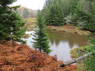 Big Run (North Fork South Branch Potomac River tributary) - The first beaver pond at the head of the marshland where Big Run originates. The beaver dam is in the lower-right corner. Also in the lower-right is a beaver-felled tree. Monongahela National Forest, West Virginia, 8 October 2017