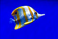 Birch Aquarium9.jpg