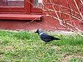 Bird10 (26023938352).jpg