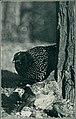 Bird notes (1922) (14568928770).jpg