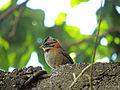 Birdiebirdie (4296340459).jpg