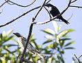 Birds (8666729441).jpg