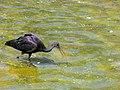 Birds Garden of Isfahan (47).jpg