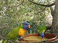 Birds at Loro Parque17.jpg