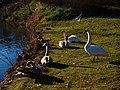 Birds of Großer Garten, Dresden (914).jpg