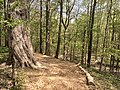 Blandford Nature Center Trail in Early Springtime.jpg